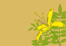 Decoratieve achtergrond met de bloemen van de Lelie royalty-vrije illustratie