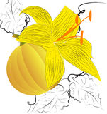 Decoratieve achtergrond met pompoen vector illustratie