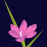 Decoratieve achtergrond met viooltje royalty-vrije illustratie