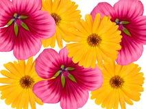 Decoratieve bloemen Royalty-vrije Stock Afbeeldingen