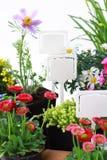 Decoratieve bloemen klaar voor het planten stock fotografie