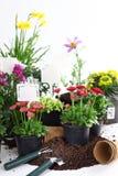 Decoratieve bloemen klaar voor het planten stock foto's