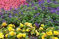 Decoratieve bloemen in tuin Royalty-vrije Stock Afbeeldingen