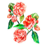 Decoratieve bloemen Vector realistische bloem Stock Fotografie