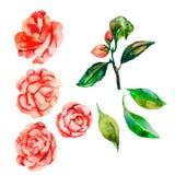Decoratieve bloemen Zie mijn andere werken in portefeuille Bloemen Royalty-vrije Stock Afbeeldingen