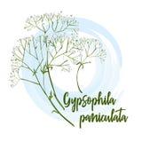 Decoratieve bloemgypsophila voor bruidboeketten, huwelijkskaarten, banners, en affiches royalty-vrije illustratie