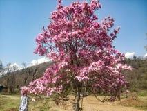Decoratieve bomen met roze bloemen Stock Afbeelding
