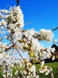 Decoratieve bomen met roze bloemen royalty-vrije stock foto's