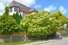 Decoratieve bomen tegen de achtergrond van een buitenhuis Royalty-vrije Stock Afbeelding