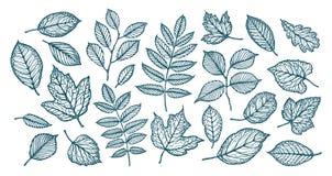 Decoratieve boombladeren Aard, bosconcept Reeks elementen Schets vectorillustratie vector illustratie