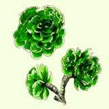 Decoratieve Cactusreeks Stock Afbeelding