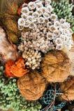 Decoratieve droge bloemen en installaties royalty-vrije stock afbeeldingen