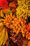 Decoratieve droge bloemen en installaties royalty-vrije stock foto