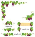 Decoratieve druivenillustratie Stock Afbeeldingen