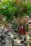 Decoratieve fuchsia in de tuin Royalty-vrije Stock Fotografie