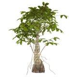 Decoratieve geïsoleerde boomstruik stock illustratie