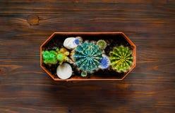 Decoratieve gekleurde cactus op een houten achtergrond, hoogste mening, lege ruimte voor tekst Stock Afbeelding