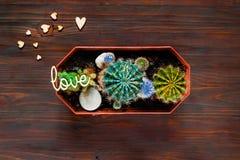 Decoratieve gekleurde cactus op een houten achtergrond met kleine houten harten, hoogste mening, lege ruimte voor tekst Stock Foto