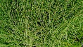 Decoratieve groene grasachtergrond en textuur Stock Afbeelding