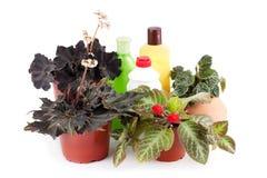 Decoratieve houseplant en middelen voor de zorg van bloemen Royalty-vrije Stock Foto