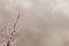 Decoratieve kersenboom op ruwe wi als achtergrond Royalty-vrije Stock Foto's