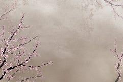 Decoratieve kersenboom op ruwe wi als achtergrond Stock Afbeelding