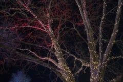 Decoratieve Kerstmislichten op bomen bij nacht Stock Foto's