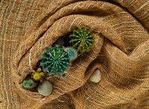 Decoratieve kleine gekleurde cactus op een achtergrond van jute, hoogste mening, vrije ruimte voor tekst Stock Fotografie