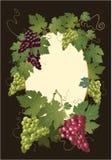 Decoratieve kleurrijke druif Royalty-vrije Stock Afbeelding