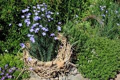 Decoratieve kruiden en bloemen Stock Fotografie