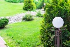 Decoratieve lantaarn en struiktuya in park Conc landschapsontwerp Stock Fotografie
