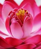 Decoratieve lotusbloemclose-up royalty-vrije stock afbeelding