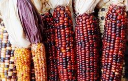 Decoratieve maïs met kleurrijke pitten stock foto