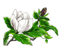Decoratieve magnoliabloem Royalty-vrije Stock Foto's