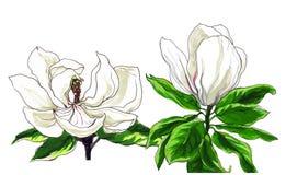 Decoratieve magnoliabloem Royalty-vrije Stock Fotografie