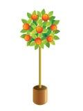 Decoratieve mandarijn-boom. Stock Foto