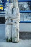 Decoratieve meertros Royalty-vrije Stock Fotografie