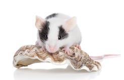 Decoratieve muis op witte achtergrond Stock Fotografie