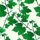 Decoratieve naadloze patroontakken van druivenbladeren stock illustratie