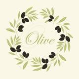Decoratieve olijftak Royalty-vrije Stock Foto