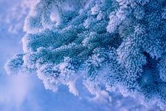 Decoratieve pijnboom en sneeuw royalty-vrije stock afbeeldingen