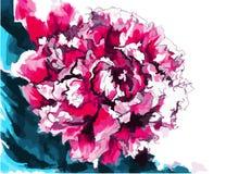 Decoratieve pioenbloem Stock Afbeeldingen