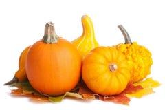 Decoratieve pompoenen en geïsoleerde de herfstbladeren Royalty-vrije Stock Foto