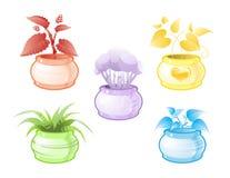 Decoratieve potteninstallaties Stock Foto's