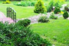 Decoratieve struiktuya in park Het Concept van het landschapsontwerp Stock Afbeeldingen