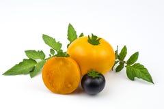 Decoratieve tomaten van oranje en purpere kleur met groene bladeren royalty-vrije stock afbeelding