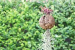 Decoratieve tuin Royalty-vrije Stock Afbeelding