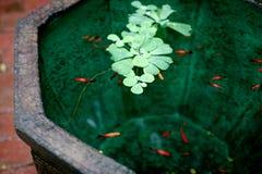 Decoratieve vissen in de vijver stock foto
