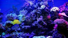 Decoratieve vissen in een groot aquarium stock footage