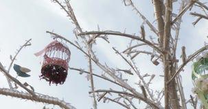 Decoratieve vogelkooien stock videobeelden